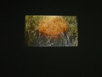 Hey II, video projection, 2011